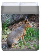 Patagonian Cavy IIi Duvet Cover