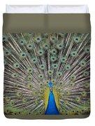 Peacock Display Duvet Cover