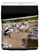 Pelicans At Pearl Beach 1.0 Duvet Cover