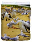 Pelicans At Pearl Beach 3.1 Duvet Cover