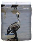 Pelicans Enjoying The Day At Playa Manzanillo Duvet Cover