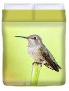 Perched Hummingbird Vi Duvet Cover