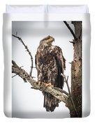 Perched Juvenile Eagle Duvet Cover