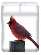 Perfect Pose - Northern Cardinal Duvet Cover