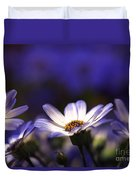Pericallis On A Cool Spring Evening 4 Duvet Cover