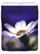 Pericallis On A Cool Spring Evening Duvet Cover