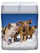 Piglets In Snow Duvet Cover