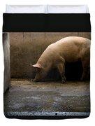 Pigs At A Hog Farm In Kansas Duvet Cover