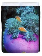 Pink Anemonefish Protect Their Purple Duvet Cover by Michael Wood