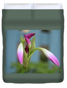 Pink Lily Bud Duvet Cover