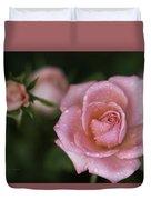 Pink Miniature Roses 3 Duvet Cover by Roger Snyder
