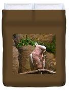 Pink Parrot Nibbling Foot 2 Duvet Cover