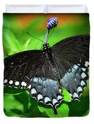 Pipevine Swallowtail Butterfly Duvet Cover