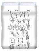 Plant Sexual Systems, Carl Linnaeus Duvet Cover