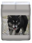 Playful Alusky Puppy Dog Ready To Pounce Duvet Cover