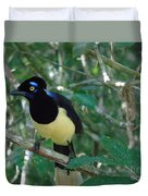Plush-crested Jay   Cyanocorax Chrysops Duvet Cover