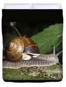 Pneumostome Of A Burgundy Snail Duvet Cover