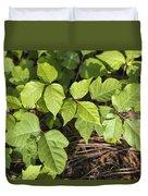Poison Oak Vine - Toxicodendron Duvet Cover