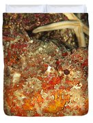 Poisonous Stone Fish, Scorpaena Mystes Duvet Cover