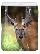 Portrait Of A Beautiful Buck  Duvet Cover
