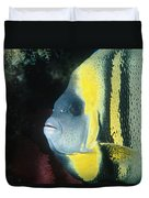 Portrait Of A Cortez Angelfish Duvet Cover