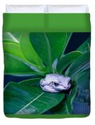 Portrait Of A Tree Frog Duvet Cover