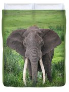 Portrait Of African Elephant Loxodonta Duvet Cover
