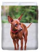 Portrait Of Red Miniature Pinscher Dog Duvet Cover