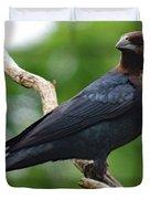 Posing Brown-headed Cowbird Duvet Cover