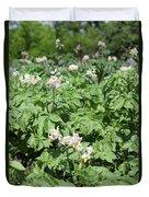 Potato Flower Agriculture Spring Scene Duvet Cover