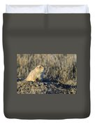 Prairie Dog Watchful Eye Duvet Cover