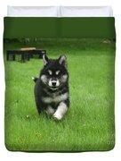 Precious Alusky Puppy Dog Running In A Yard Duvet Cover
