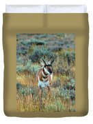 Pronghorn Antelope Amid Fall Foliage Wyoming Duvet Cover