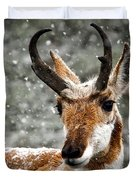 Pronghorn Buck In Snow - Yellowstone National Park Duvet Cover
