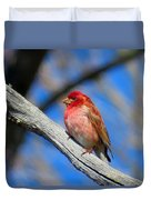 Purple Finch In Spring Duvet Cover