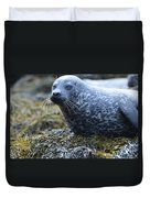 Really Cute Harbor Seal On Seaweed Duvet Cover