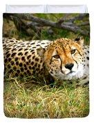 Reclining Cheetah Duvet Cover
