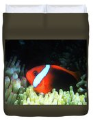 Red And Black Anemonefish, Great Barrier Reef Duvet Cover