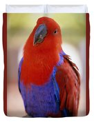 Red Blue Macaw Duvet Cover