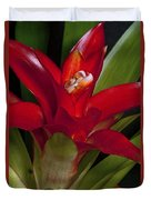 Red Bromiliad Duvet Cover