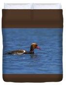 Red-crested Male Pochard Duck, Netta Rufina Duvet Cover