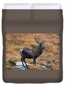 Red Deer Stag In Autumn Duvet Cover