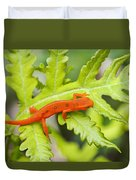 Red Eft Eastern Newt Duvet Cover