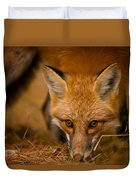 Red Fox Pictures 162 Duvet Cover