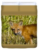 Red Fox Pictures 34 Duvet Cover