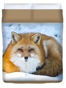 Red Fox Pictures 98 Duvet Cover
