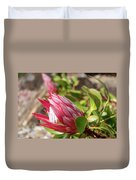 Red King Protea Bud Duvet Cover