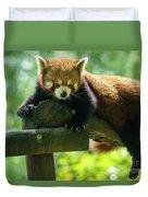 Red Panda Ailurus Fulgens Jerez De La Frontera Spain Duvet Cover