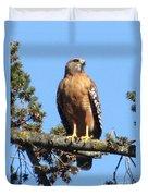 Red Shouldered Hawk Duvet Cover