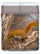 Red Squirrel Pictures 145 Duvet Cover